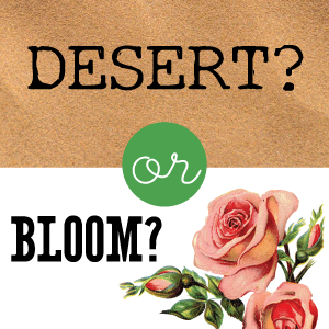 DesertBloomFeatured