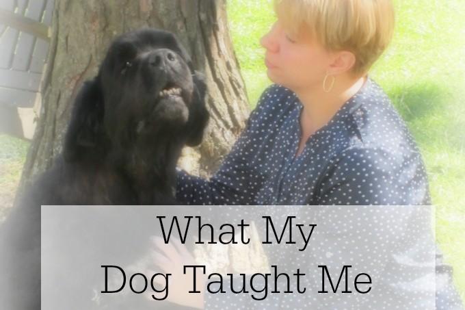 Dog Taught Me